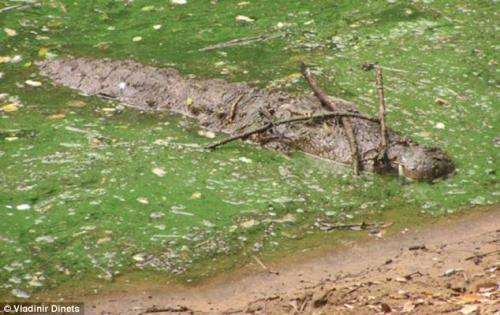 University of Tennessee study finds crocodiles are cleverer than previously thought