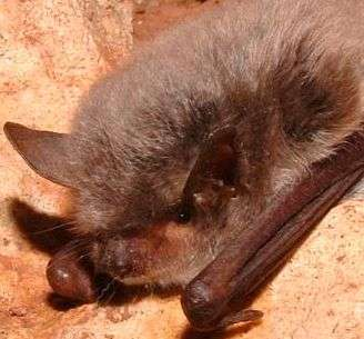 Bats and rabies virus: More data on colonies at high risk