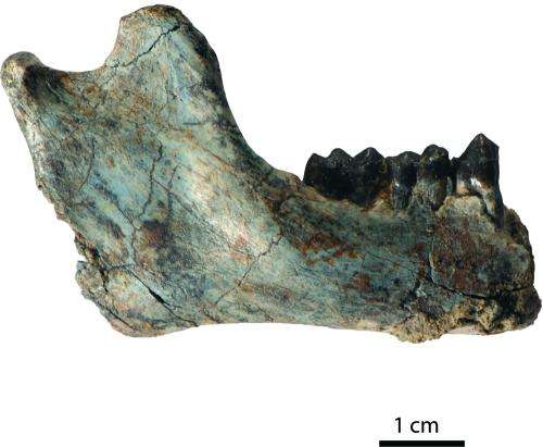 Scientists discover oldest evidence of split between Old World monkeys and apes
