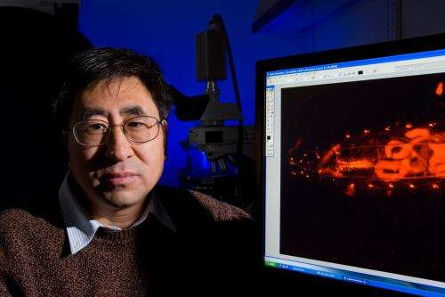 Researchers identify brain pathway triggering impulsive eating