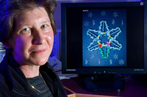 Scientists construct visual of intracellular 'zip code' signaling linked to learning, memory