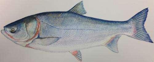 Next-generation gene sequencing can identify invasive carp species in Chicago area waterways