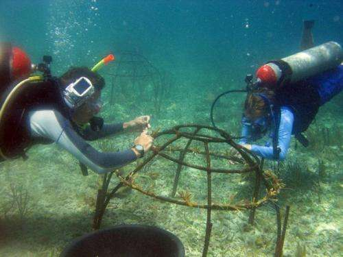 Research team looks to Kickstarter to fund swarming 'coralbots' to repair damaged coral