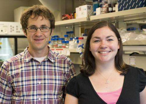 Researchers discover a new way that influenza can infect cells