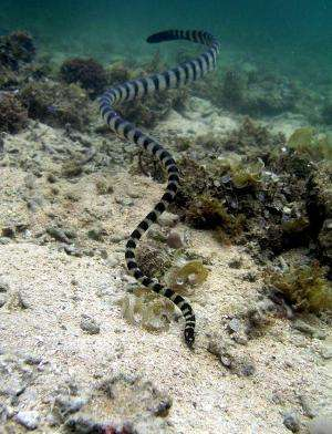 Scientists discover reasons behind snakes' 'shrinking heads'
