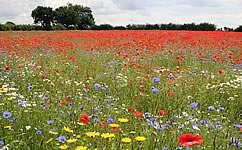 Climate change already affecting UK wildlife