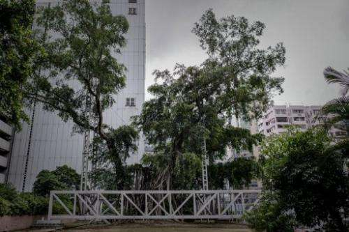 A 400-year-old banyan tree is seen in Kowloon Park in Hong Kong on August 23, 2013