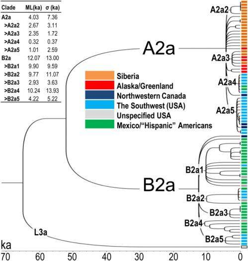Getting here from there: Mitochondrial genome clarifies North American migration models