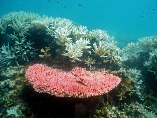 A handout photo from the Australian Institute of Marine Science shows coral on the Great Barrier Reef