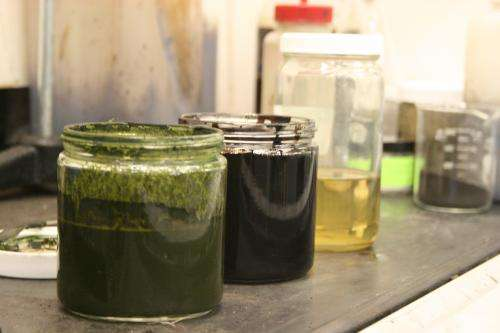 Algae to crude oil: Million-year natural process takes minutes in the lab