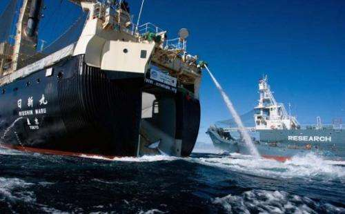 A minke whale is seen being loaded on to the Nishin Maru, on February 15, 2013