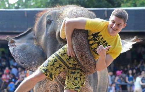 An elephant lifts a tourist during a show in Pattaya, on March 1, 2013