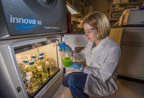 Engineering alternative fuel with cyanobacteria