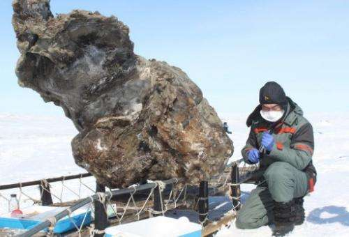 A researcher in Yakutsk on May 13, 2013 next to a carcass of a female mammoth found on an island in the Arctic Ocean