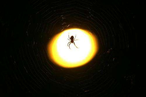 A spider stands on her cobweb on September 10, 2009
