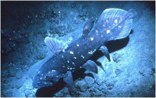 A*STAR scientists decipher genome code of a living fossil