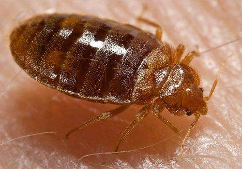 Bed bugs can survive freezing temperatures, but cold can still kill them