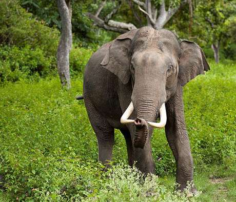 Better elephant stimulation needed to get good sperm