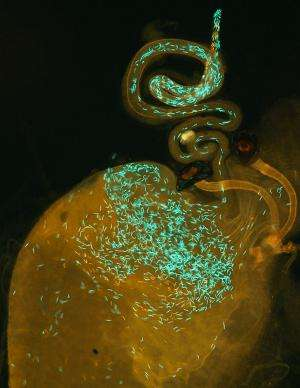 Biologists confirm role of sperm competition in formation of new species