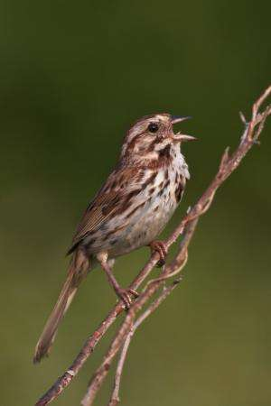 Bird's playlist could signal mental strengths and weaknesses