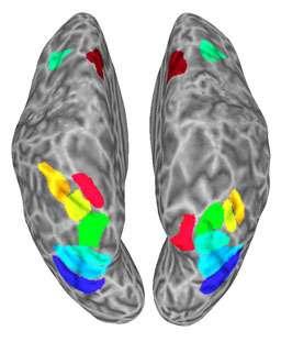 Brain pathways tie together mental maps