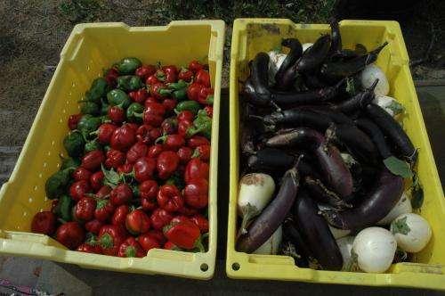 Can a Mediterranean diet suit American tastes?
