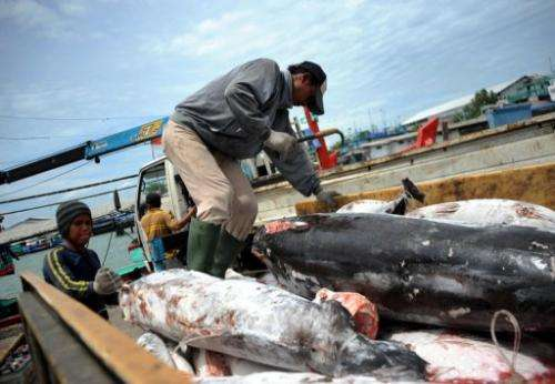 Carcasses of finless sharks are being unloaded in Benoa, on Indonesian resort island of Bali, on February 25, 2013