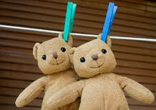 Cat and dog allergens on soft toys a risk for asthmatics