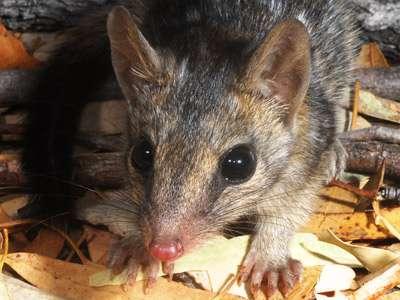 Cats threaten native mammal survival in our tropical savannas