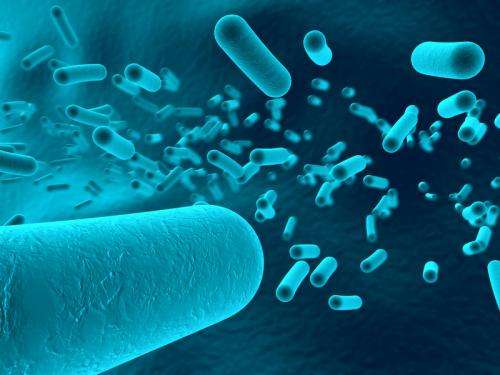 Chemotherapy: When our intestinal bacteria provide reinforcement