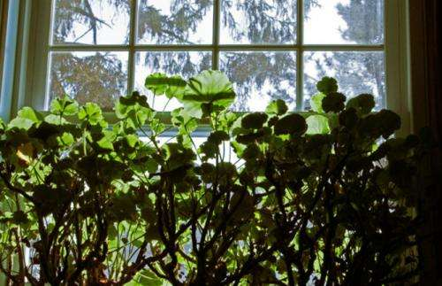 Clearing the air: The hidden wonders of indoor plants