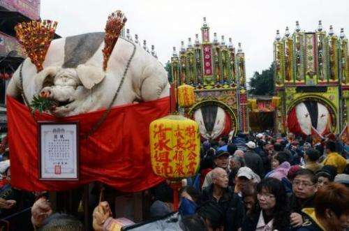 Controversial 'Holy Pig' festival, seen outside a Taoist temple in Shanhsia, the New Taipei city, on February 15, 2013