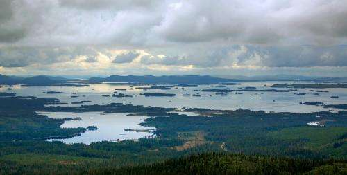 Study finds fungi, not plant matter, responsible for most carbon sequestration in northern forests