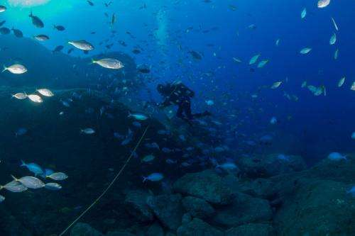 Global study reveals new hotspots of fish biodiversity