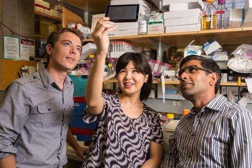 Drug blocks light sensors in eye that may trigger migraine attacks