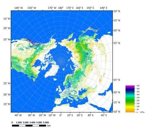 Earth's northern biomass mapped and measured