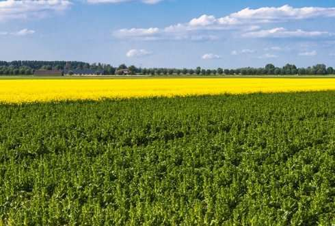 Ecological knowledge offers perspectives for sustainable agriculture