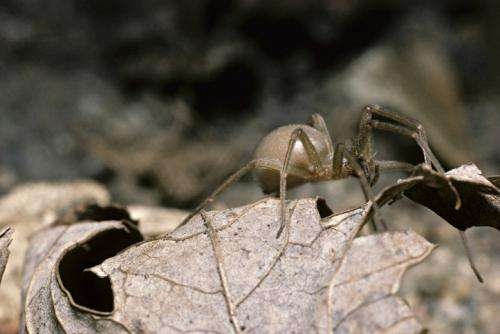 Engineered spider toxin could be the future of anti-venom vaccines