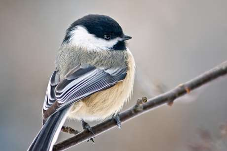 Even low-level PCBs change bird songs