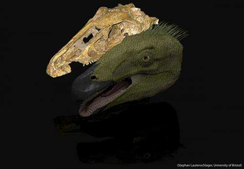 New study sheds light on the functional importance of dinosaur beaks