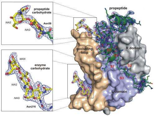 First-ever determination of protein structure with X-ray laser