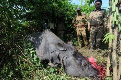 Forest officials near a one horned Rhino, which was killed and de-horned by the poachers in India on September 27, 2012