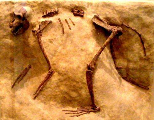 Fossil find adds three million years to oldest known old-world monkey