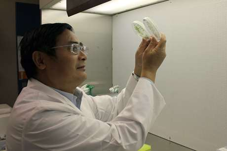 'Fountain of youth' for leaves discovered