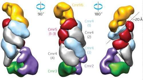 Functional diversity in bacterial defense mechanism against viral invasion
