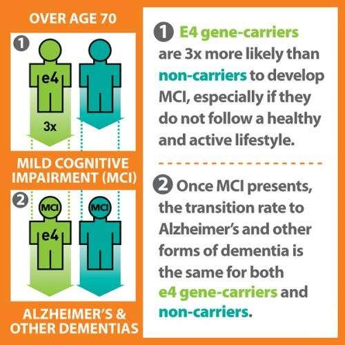 Gene is marker only for mild cognitive impairment