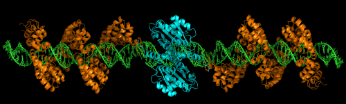 Genetic editing shows promise in Duchenne muscular dystrophy