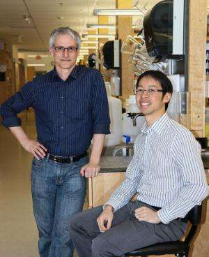 Getting a grip on hand function: Researchers discover spinal cord circuit that controls our ability to grasp