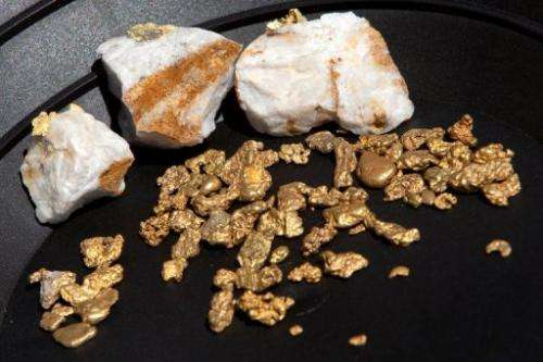 Gold nuggets on display on April 29, 2011 in Jamestown, California