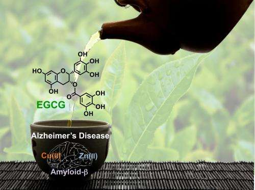 Green tea extract interferes with the formation of amyloid plaques in Alzheimer's disease